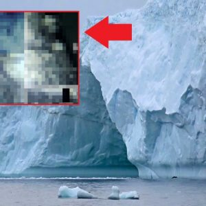 Science: Researchers are discovering strange creatures in Antarctica