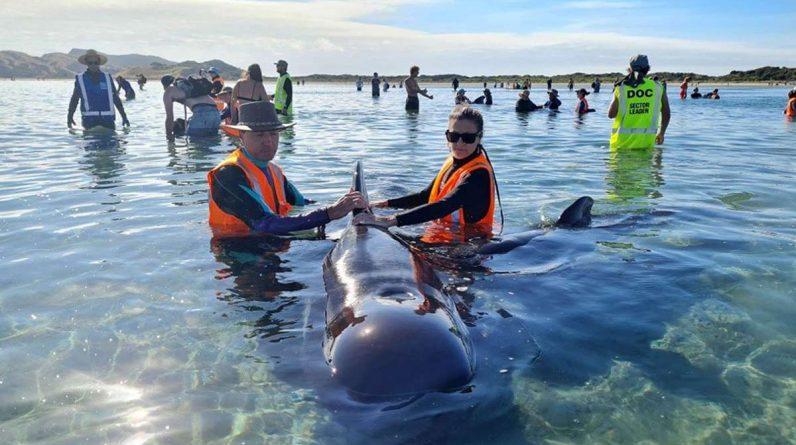 Helfer von der Organisation Project Jonah versuchen, die Walen zu retten. Foto: AFP/Project Jonah