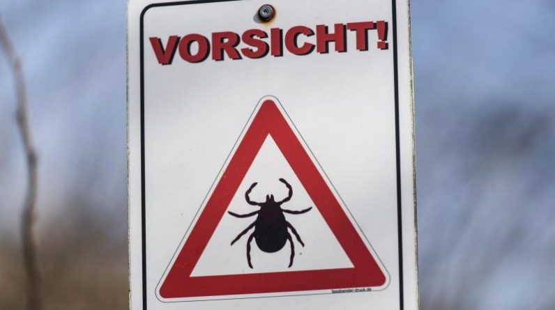 Science - Berlin - TBE by ticks: Dessau-Roßlau new danger zone - knowledge