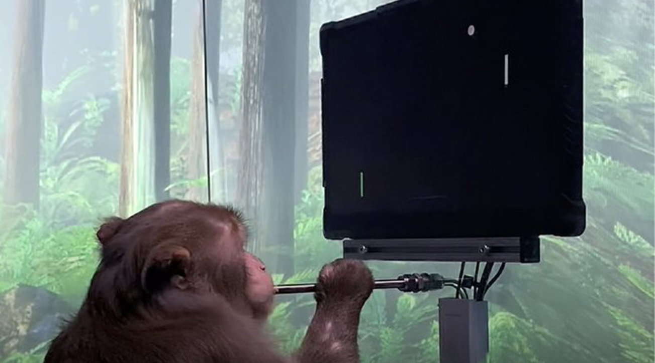 Video games: a monkey that plays pong with his mind thanks to Neuralink