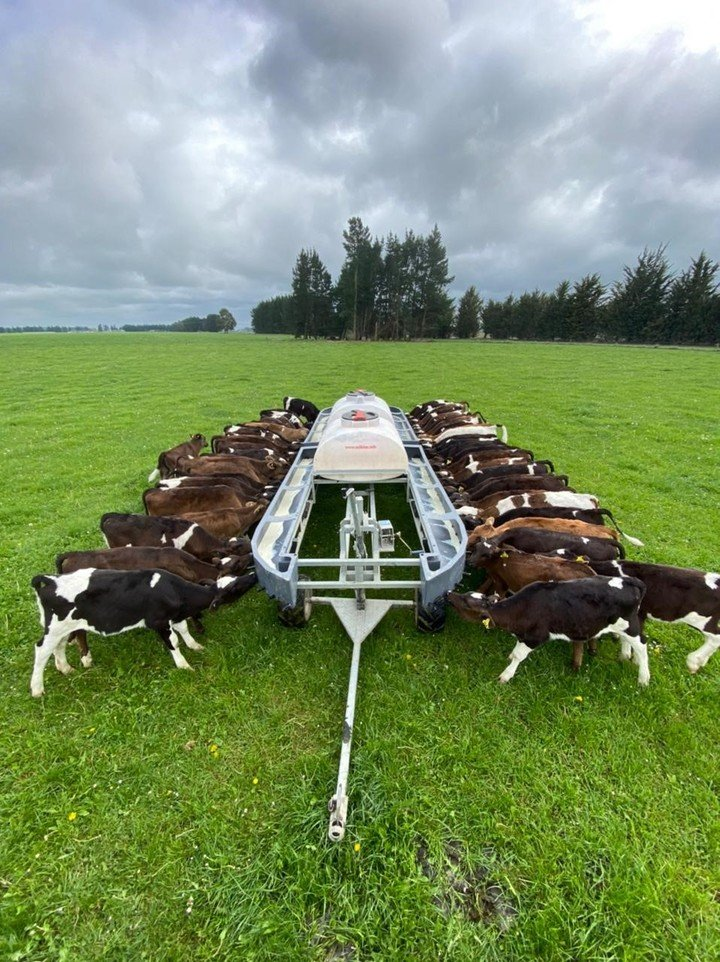 100 calf feeder in Ashburton.