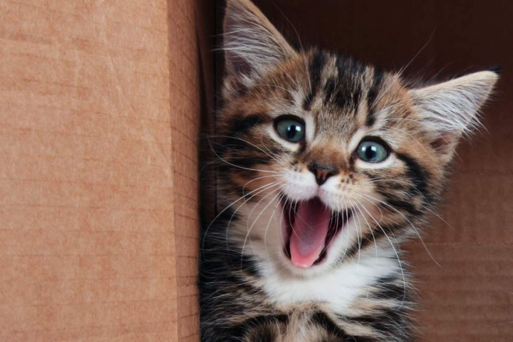 """Science confirms this, watching videos with """"cute animals"""" significantly reduces stress!"""