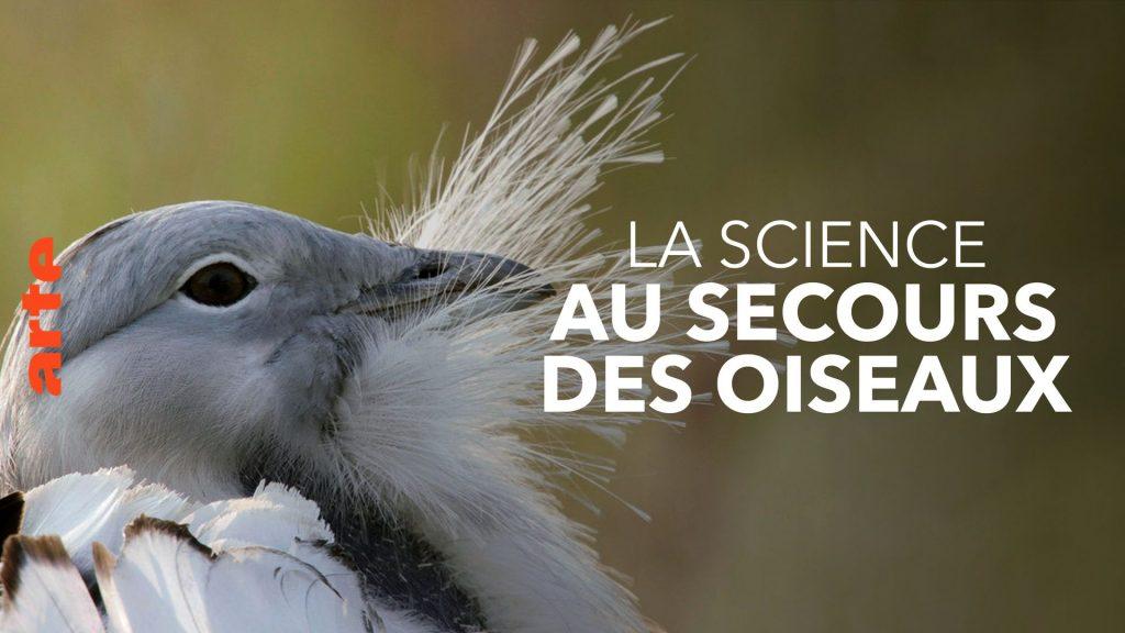 Science to Save Birds - Operation Houbara - Watch the full documentary