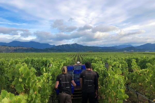 Very poor crop in New Zealand