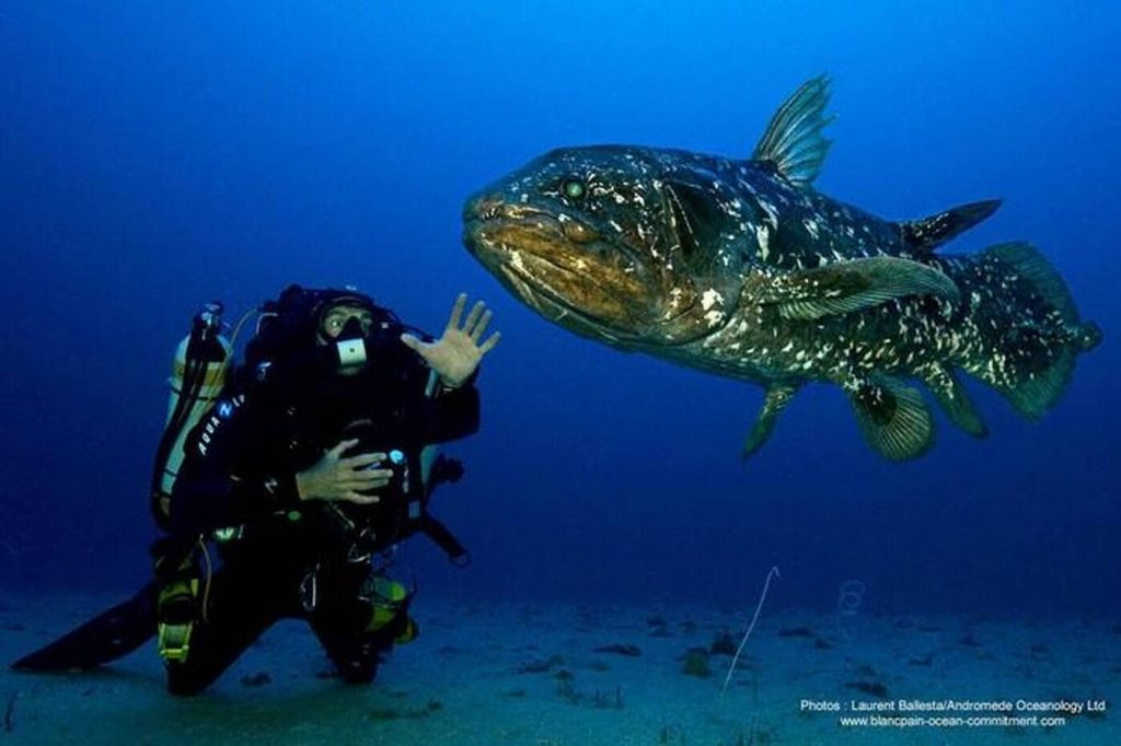 What is the secret of the coelacanth, this fossil fish of the abyss, capable of living for a hundred years?  West France Evening Edition