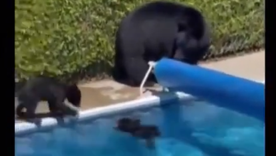 Temperature record - 47.9 degrees Celsius recorded in Canada: bears dive in the pool