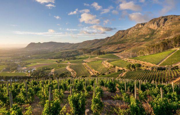 AUSTRALIA, CILE, DENIS PANTINI, EXPORT, MONDO, NUOVA ZELANDA, SUDAFRICA, USA, vino, WINE MONITOR, Mondo