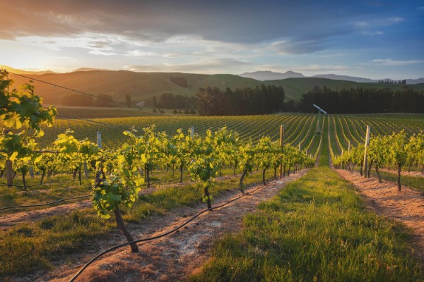-30% of New Zealand wine can change the situation for a long time