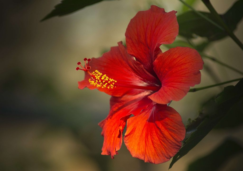 Hardly anyone knows about these three plants with beautiful flowers that can withstand heat