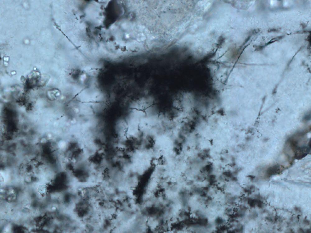 Microfossiles filamenteux