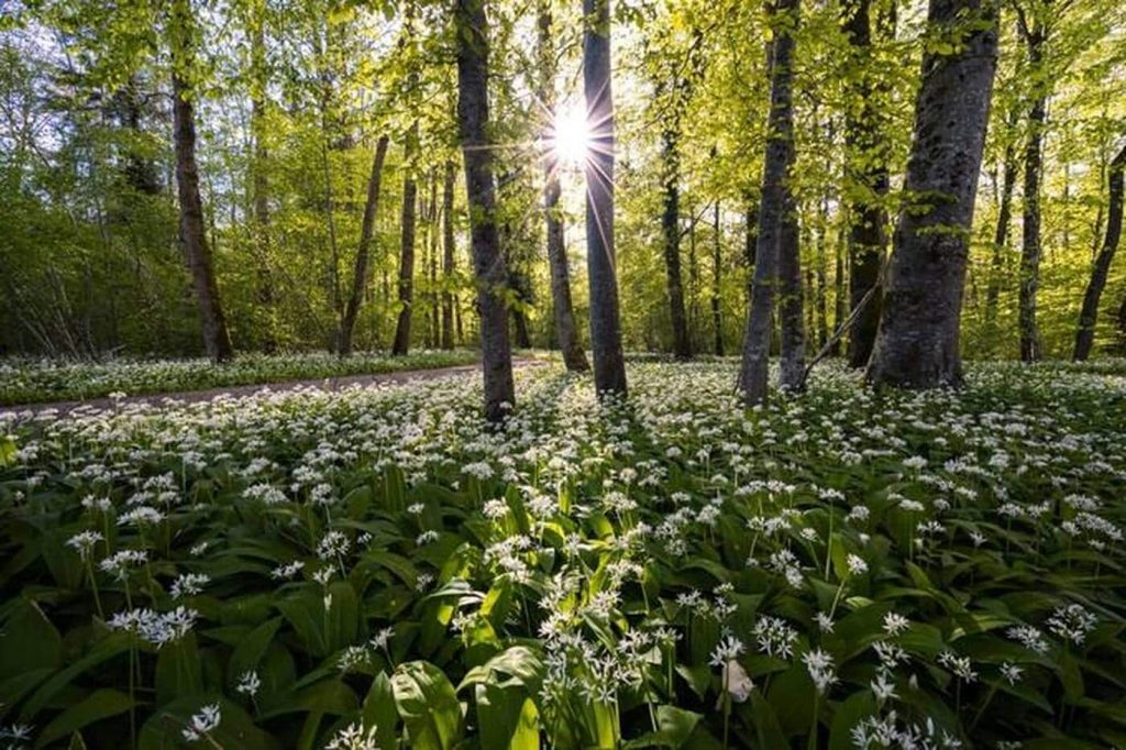 Neighboring green spaces improved adolescent mental health - West France Evening Edition