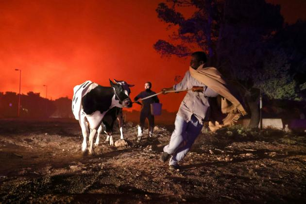 Residents clear their cattle in Trachomacdonis, north of Athens, on August 7, 2021.