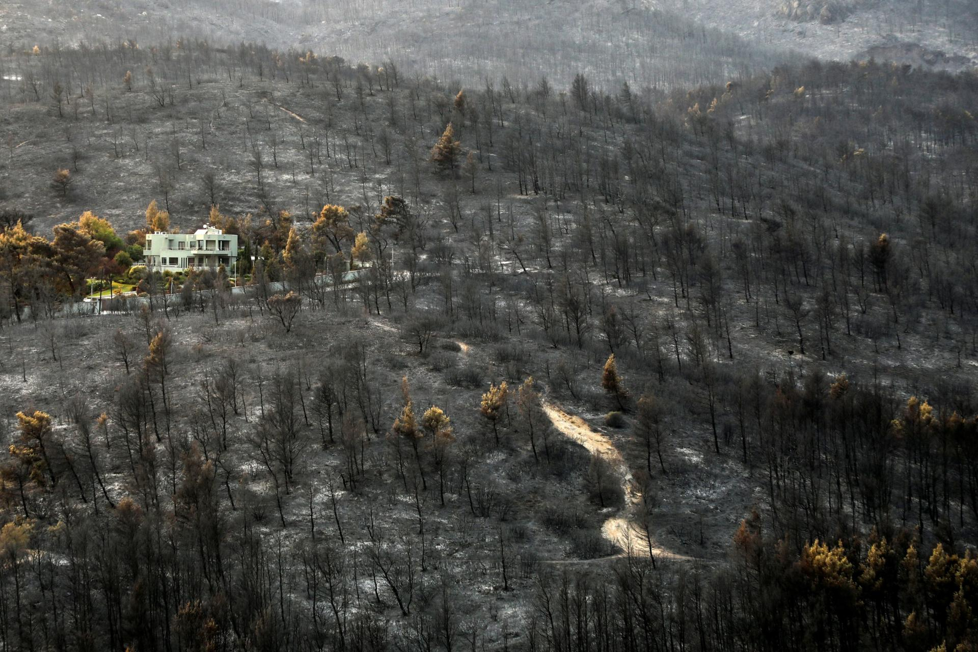A burning forest near Varympompi, a suburb of Athens, August 9, 2021.