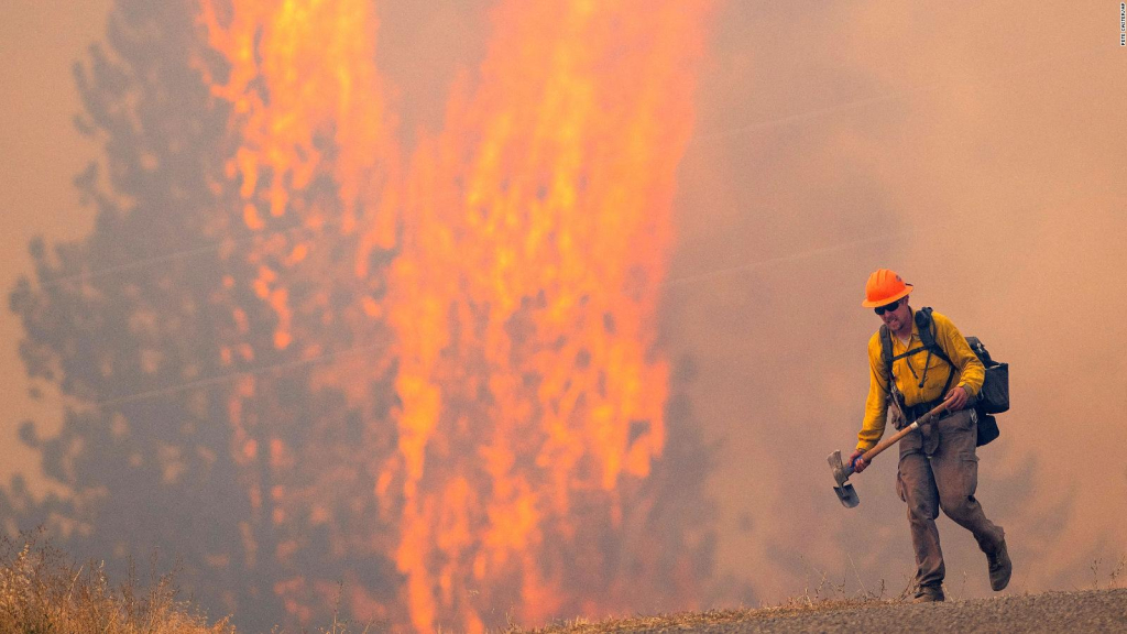 The effects of forest fires increase the risk of infection with the virus