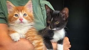 The orange cat in the box helps another cat with a similar story to hers