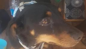 Barry, they steal the wagon with the dog Ugo inside: thanks to the neighborhood and social networks, he was found within 24 hours
