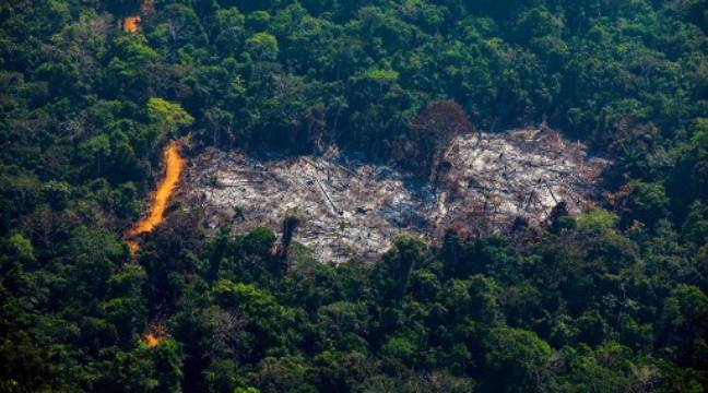 The study found that insects can no longer fly due to deforestation
