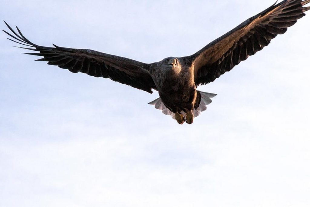Researchers have found a terrifying eagle in Australia, and a giant penguin in New Zealand