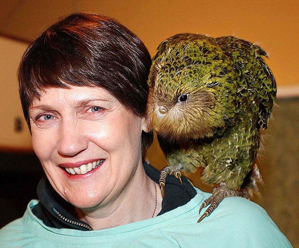 Kakapo, New Zealand's fattest parrot is 2020's bird