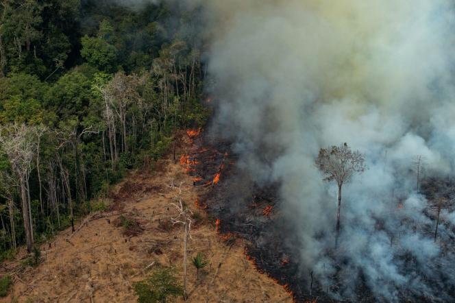 A piece of forest illegally removed by a fire in the municipality of Candes de Jamari, northwest Brazil, August 24, 2019